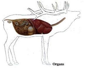 Elk anatomy diagram