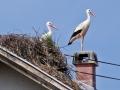 Gnijezdo rode na krovu kuće