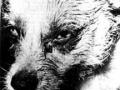 Paralitički stadij u psa