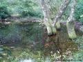 Stablo proviruje iz vode