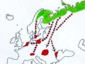 karta migracije guske glogovnjače