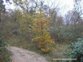 jesen-5 copy