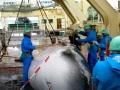 japan-kitovi-1