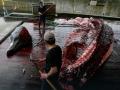 japan-kitovi-2