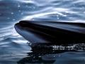japan-kitovi-7