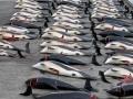 japan-kitovi-8