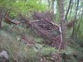 Srušena stabla