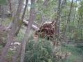 Srušena stabla u mješovitoj šumi
