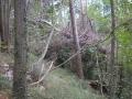 Osušena srušena stabla