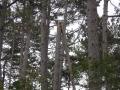 Srušena stabla sa granama koje vise