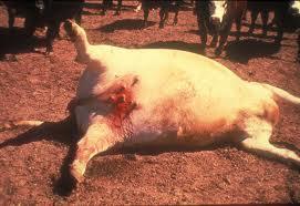 Uginule domaće životinje