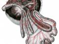 tanko, slijepa i debelo crijevo ptica