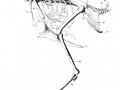 kostur ptica
