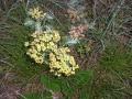 cvijeće 2