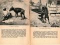 Slike-iz-knjizice-o-bjesnoc