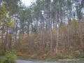 jesen-4 copy