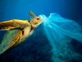 Morska kornjača i plastčna vrečica