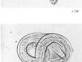 Dictyicaulus filaria u jelena 2