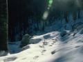 Tragovi risa na snijegu
