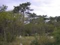 Šuma blizu vrha