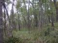 Mlada šuma
