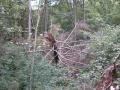 Srušena stabla i korijenje